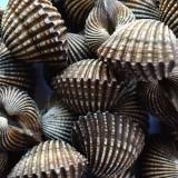 shells-166892_640